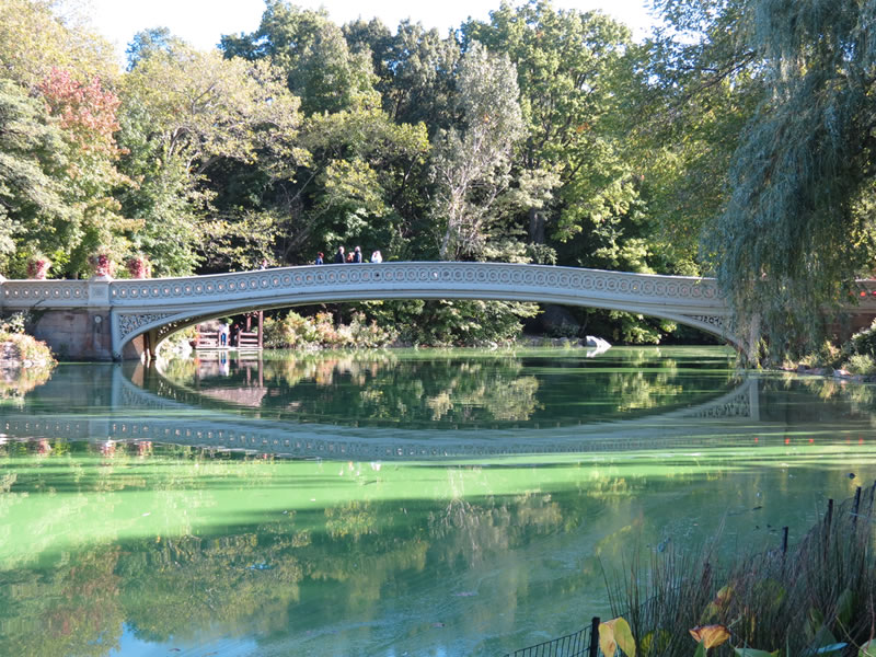 Central Park Reflections: CP14 []