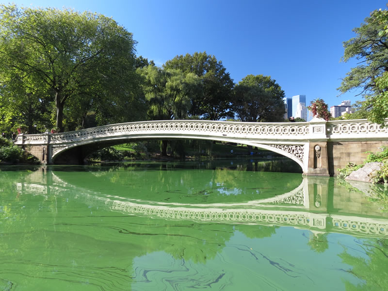 Central Park Reflections: CP15 []