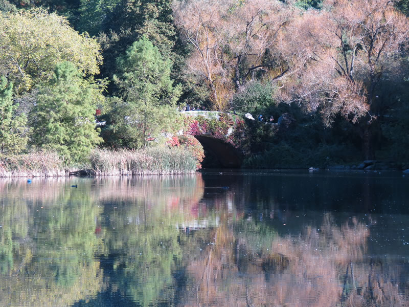 Central Park Reflections: CP17 []