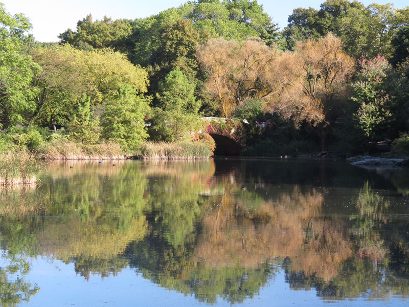 Central Park Reflections: CP18 []