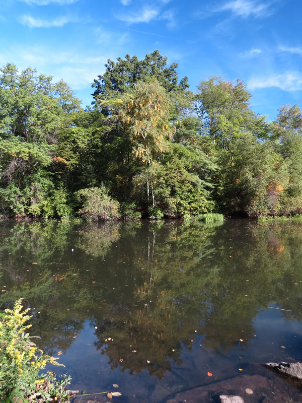 Central Park Reflections: CP19 []