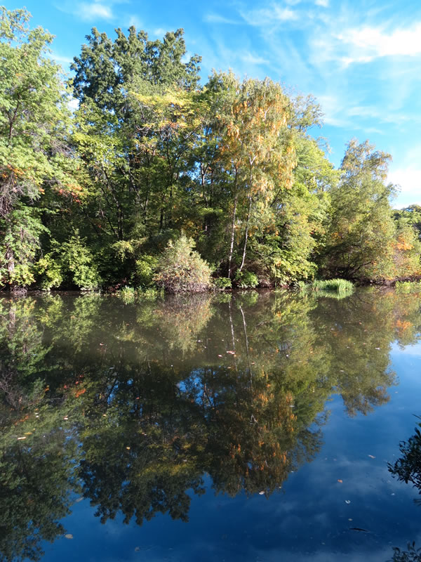 Central Park Reflections: CP20 []