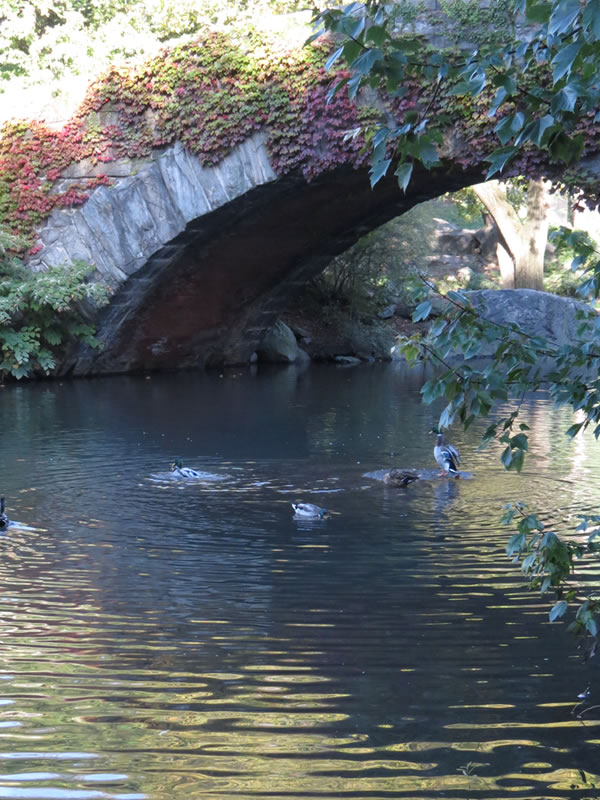 Central Park Reflections: CP23 []
