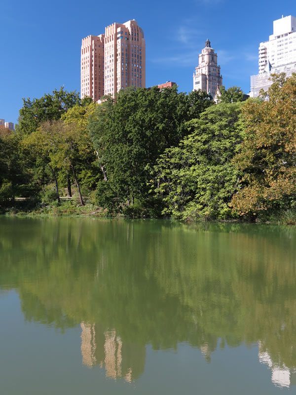 Central Park Reflections: CP05 []