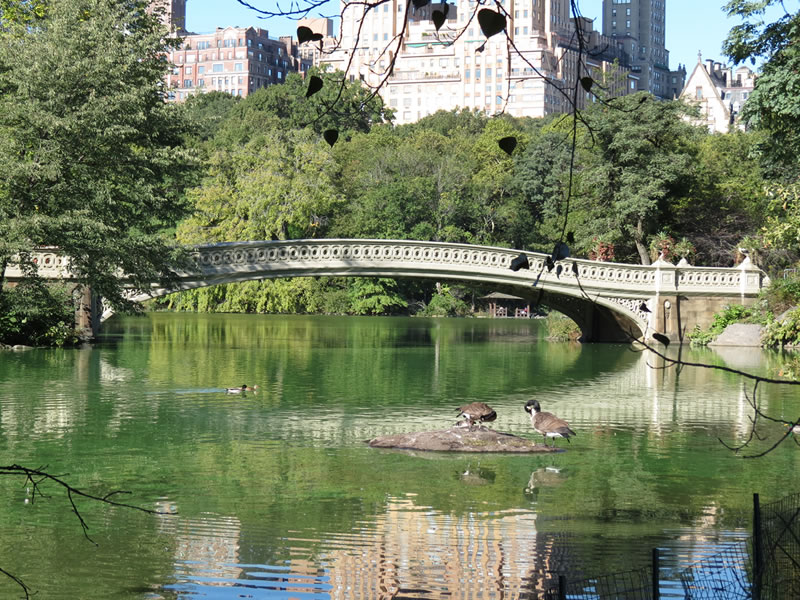 Central Park Reflections: CP16 []